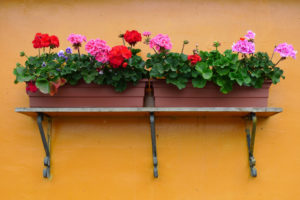 Shelf for vertical garden