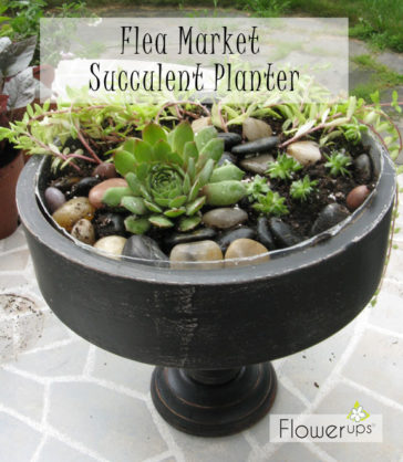 Flea Market Planter – Succulent Planter from Goodwill