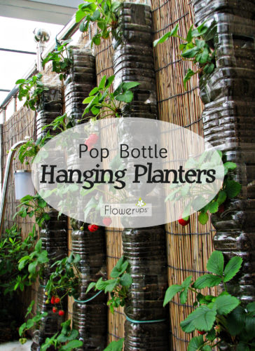 DIY Hanging Planters made with Pop Bottles Tutorial