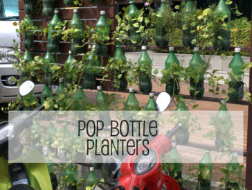 Pop Bottle Planters – DIY Creative Recycled Garden Project