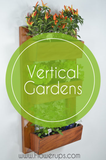 vertical and hanging gardens
