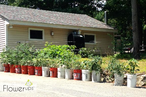 Hanging planters in urban garden