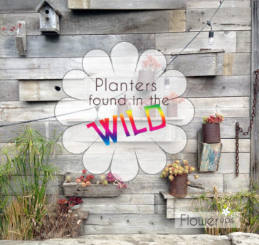 Hanging planters, urban gardens, flower pots, container gardens spotted in the wild!