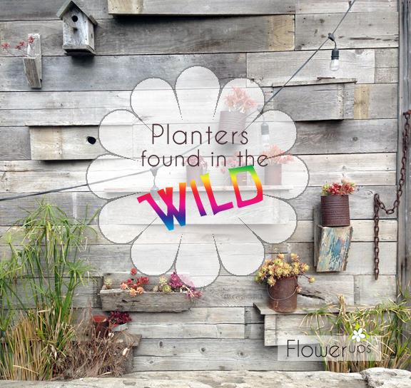 handing planter urban garden