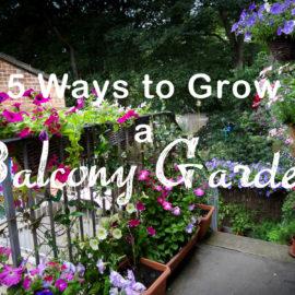 The Balcony Garden – 5 Great Ways to Grow a Balcony Garden