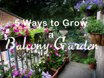 The Balcony Garden – 5 Great Ways to Grow a Balcony Garden