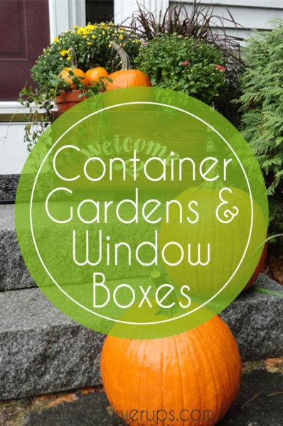 container gardens and window boxes