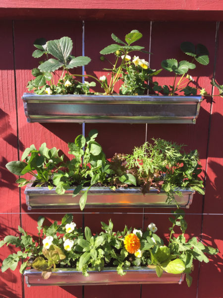 vertical garden for balcony garden