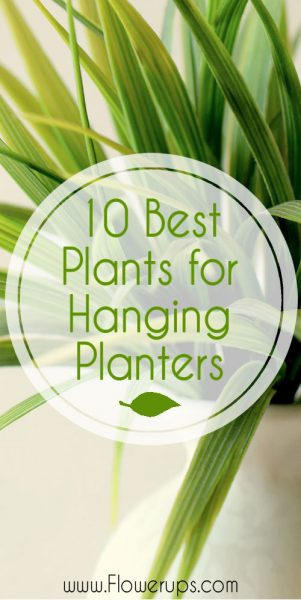 Hanging Plants Best For Wall Planters