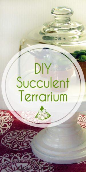 DIY Succulent display terrarium