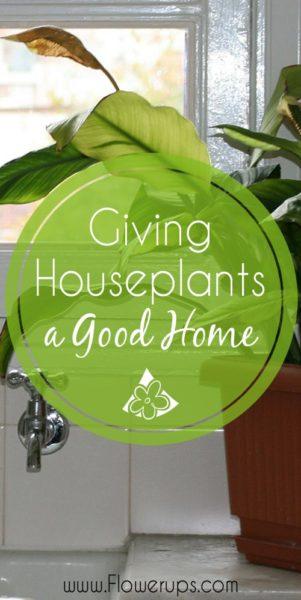 Houseplants growing conditions