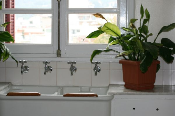 humidity for house plants and plant hangers