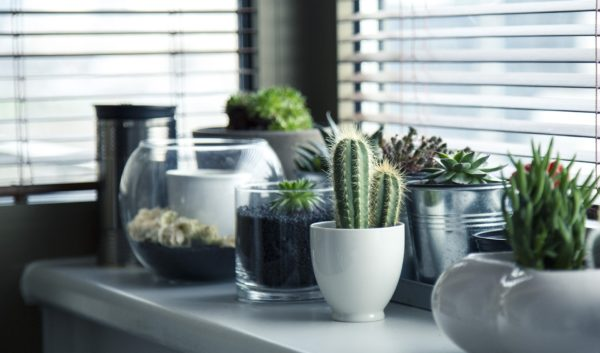 light for house plants and hanging planters
