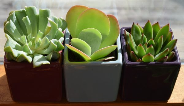 Temperature for house plants and hanging planters