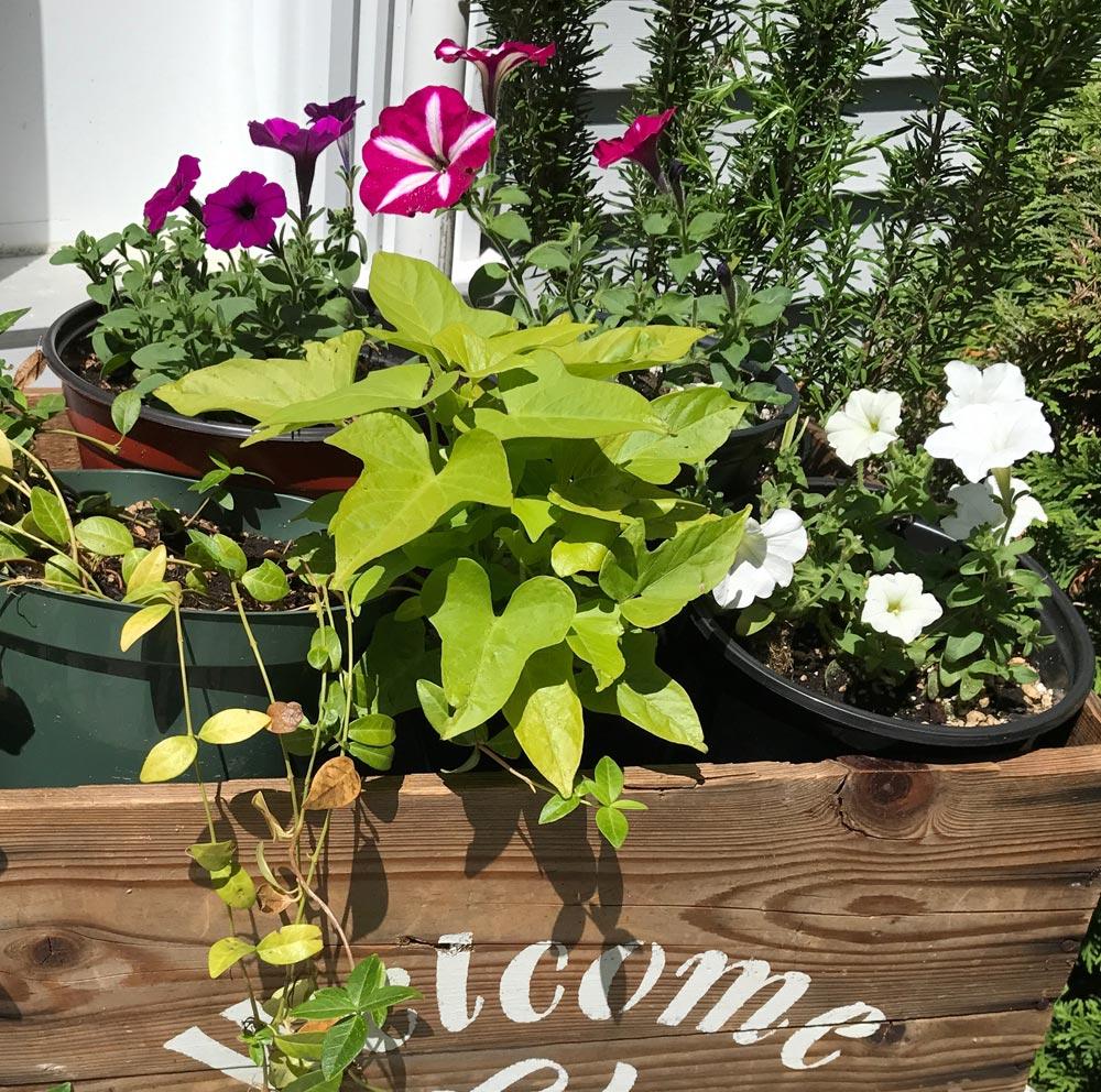 10 Best Herb Garden Thrillers For Your Container Garden